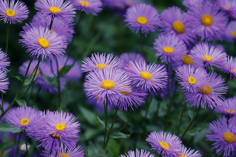 Создать свой цветочный уголок могут жители нашего района
